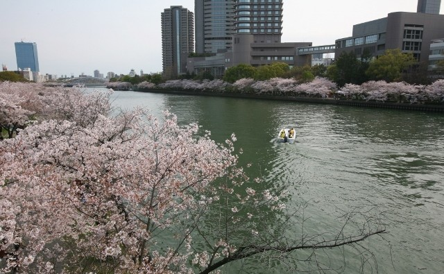 櫻花逍遙の会